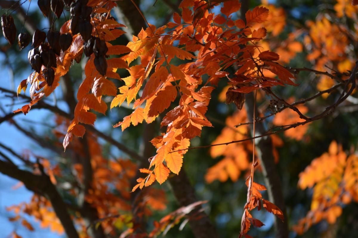 Fall Photo Walk: PostPeak