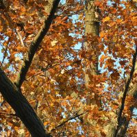 Fall Photo Walk, November 25